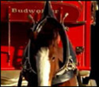 Thespunkercomyoungclydesdale_1